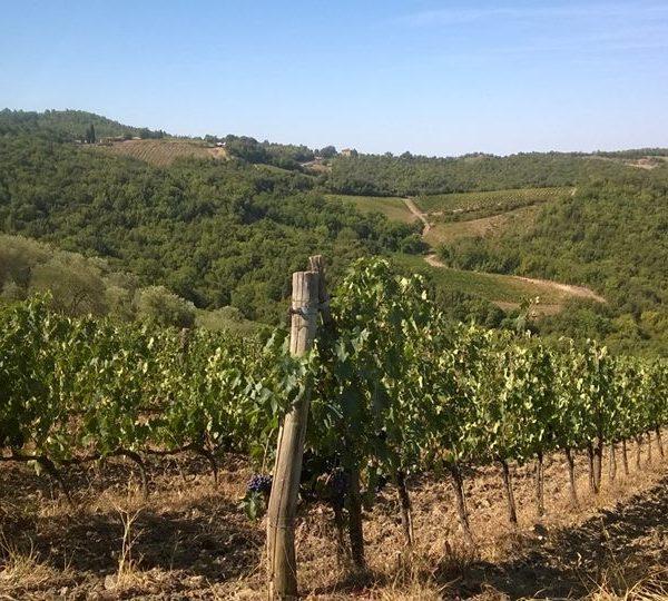Albatreti vigne 3
